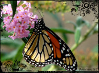 Spring, Butterflies, #EarthDay & Earth Day Link-Up