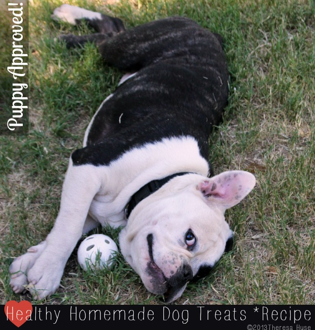 Puppy with a ball, Old English Bulldog Puppy, Theresa Huse 2013