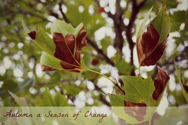 An Autumn Day Around Our Home: Photography & Words