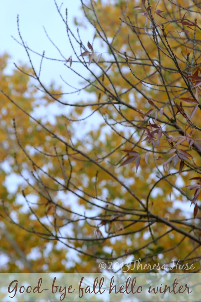Trees leaves falling off_Winter_Theresa Huse 2013