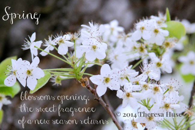 pring_dogwood blossom and a spring quote_