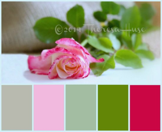 rose with color palette