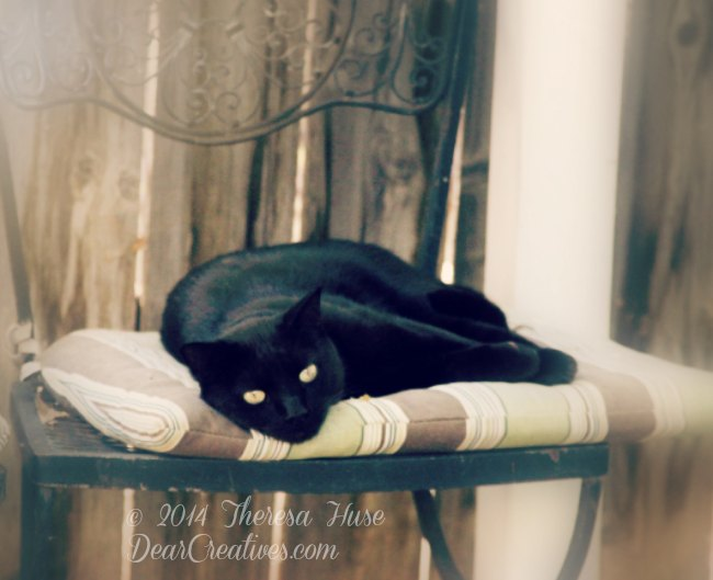 Black cat on a chair _