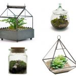 Terrarium Crafts | Terrariums