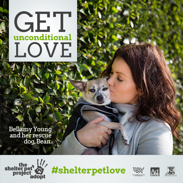 #ShelterPetLove A Story of Adoption And How You Can Help