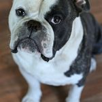 Tips For Dog Lovers | Top Ways To Show Your Dog You Love Them