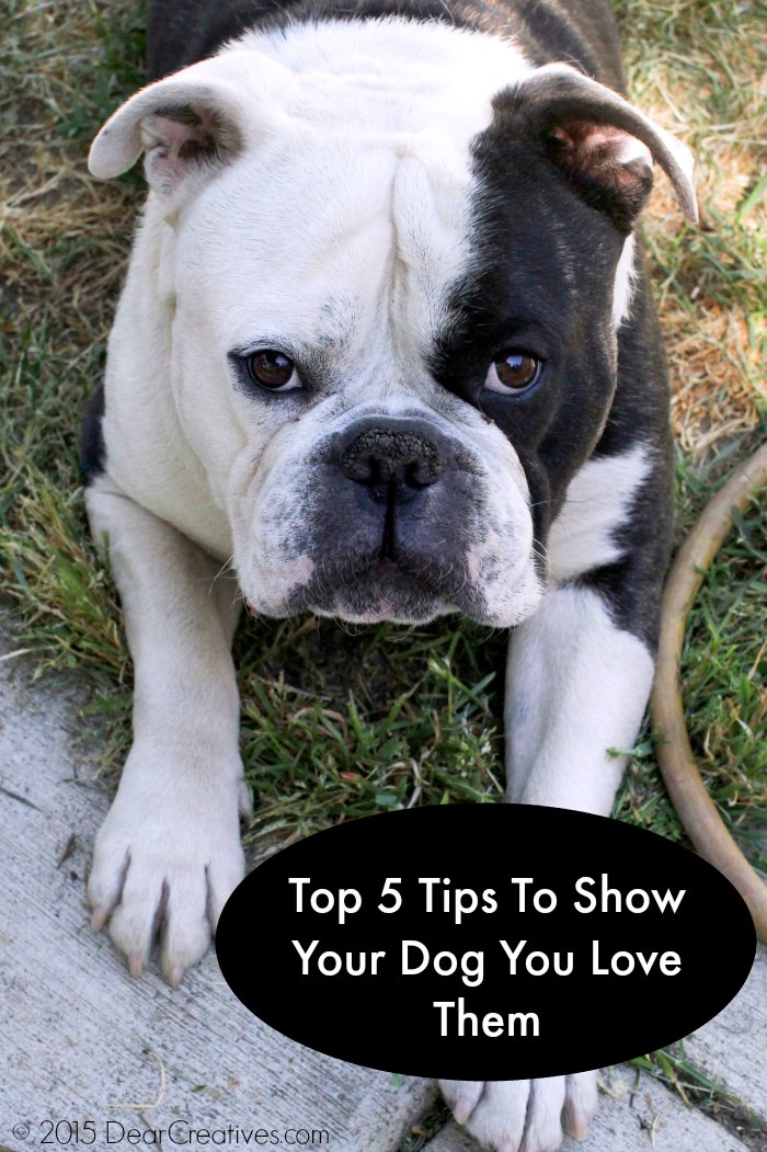 Family Pets: It's A Dogs World! 5 Top Ways To Show Them