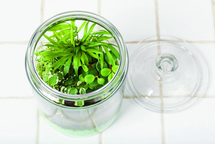 terrariums with lid sitting next to it Gardens Under Glass diy terrariums pg 83A