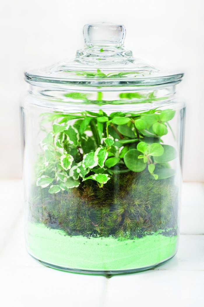 terrariums | Gardens Under Glass diy terrariums