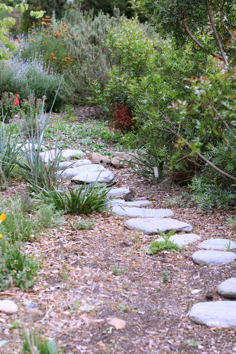 Fun things to do. San Luis Obispo Botanical Garden- DearCreatives.com Pathway at the botanical gardens with a wild baby bunny on it.
