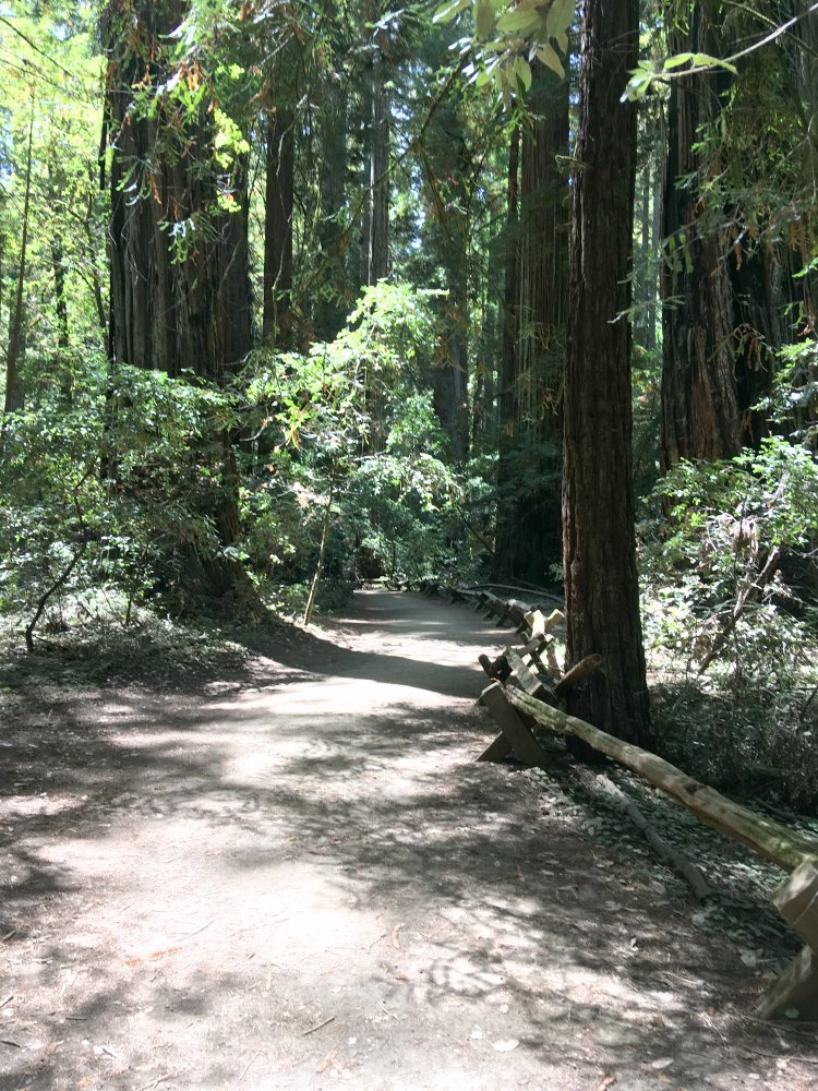 Armstrong Redwood Park Trail California © 2017 DearCreatives.com