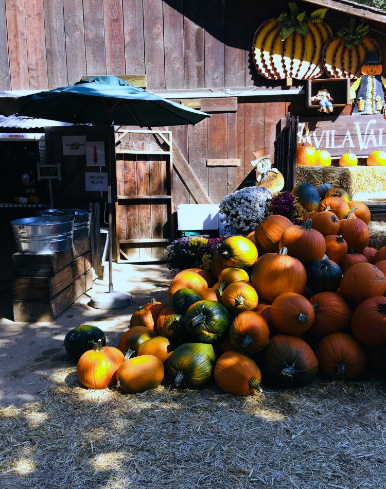Avila Valley Barn pumpkins, haystacks, barn. Find out all the fun things to do there DearCreatives.com