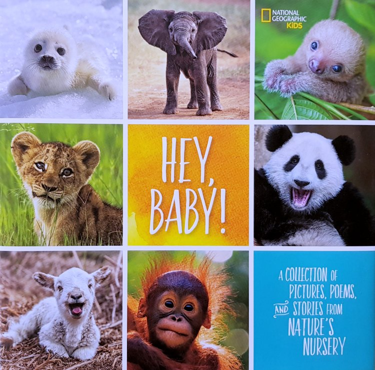 Hey Baby A National Geographic Kids Book Find out more © 2017 DearCreatives.com
