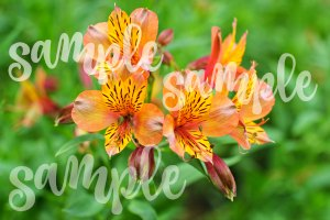 bontanical flower nature photography © 2017 Theresa Huse sample nature flower photography that I printed on canvas