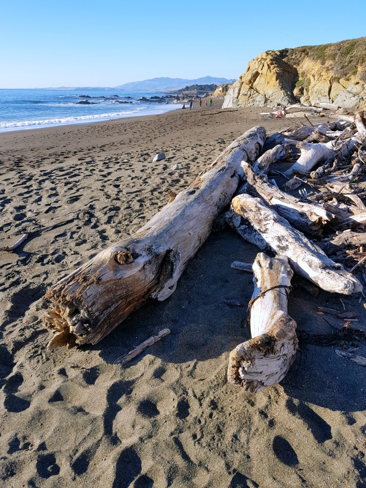 Driftwood along the shoreline at moonstone beach Cambria, Calfornia
