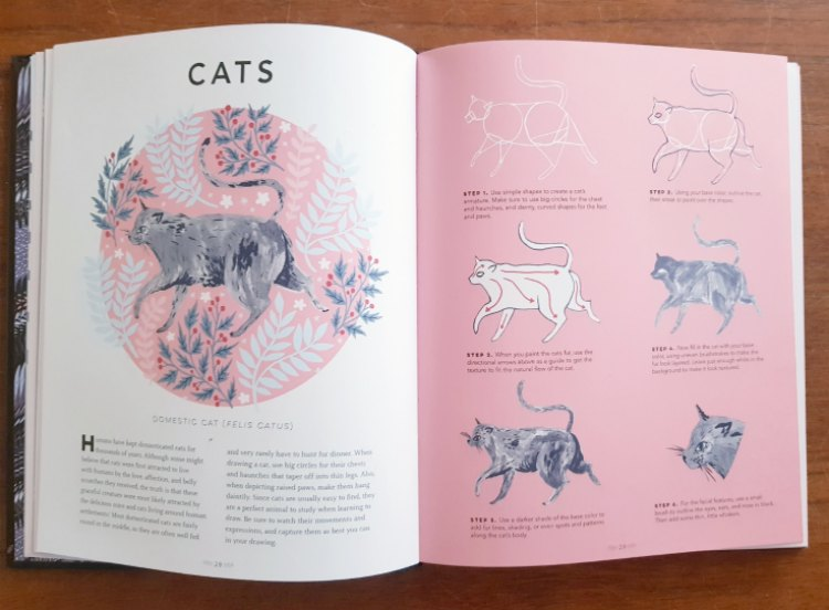 inside the book The Creature Garden how to draw animals CATS DearCreatives.com