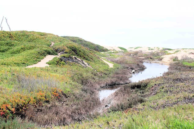 hiking trail in nature along the Pismo beach nature preserve in California - healthy lifestyle tips DearCreatives.com