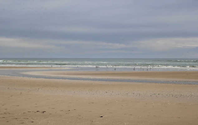 get in harmony with nature - view from the walk on the beach we spotted sand pipers, se gulls, and other birds along the shoreline - places to walk, hike and healthy lifestyle tips - DearCreatives.com
